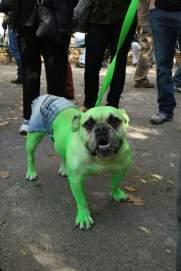 dogcostume13
