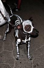 dogcostume14